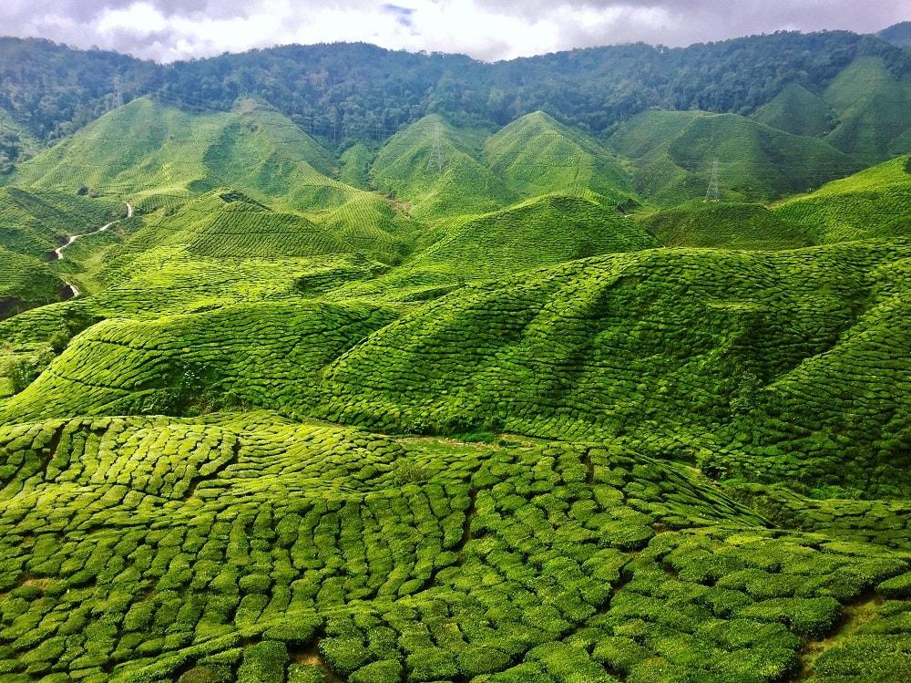 Teeplantagen soweit das Auge reicht. Die Aussicht ist einfach traumhaft schön.