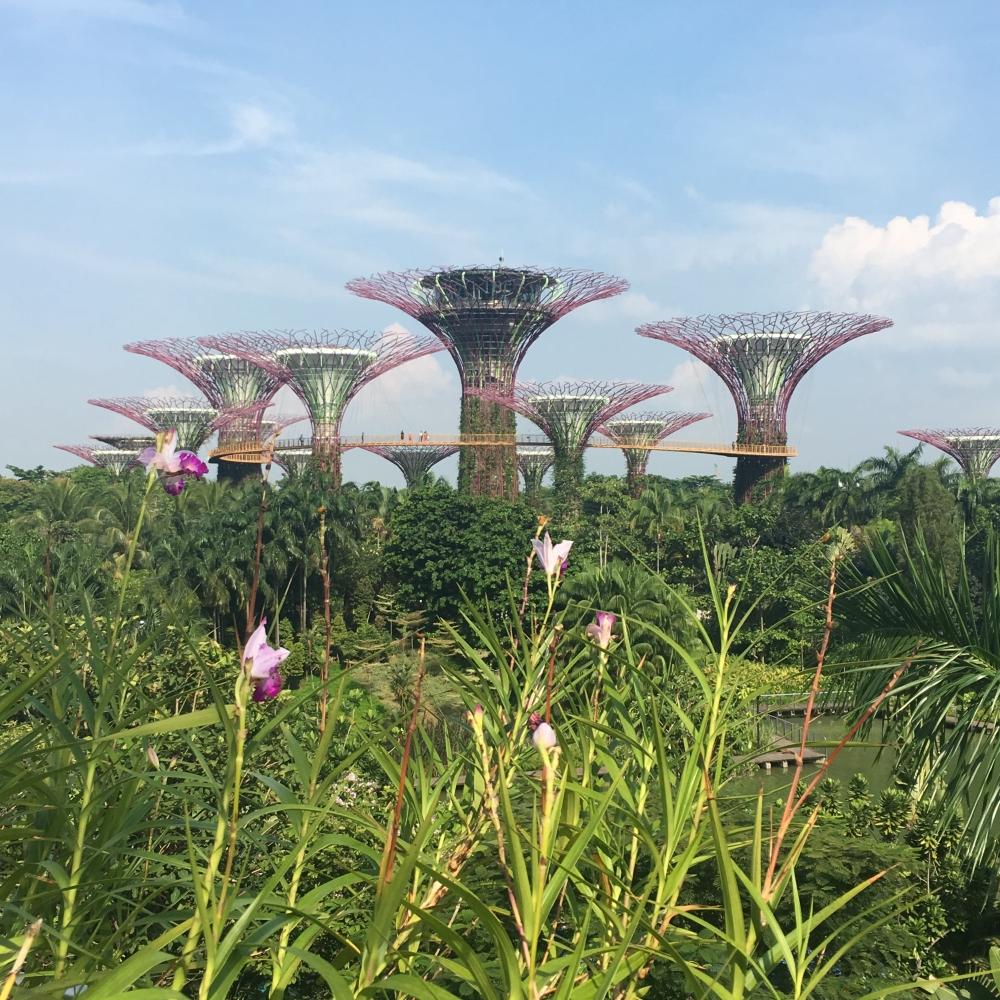 """Die """"Supertrees"""" mitten in Singapur."""