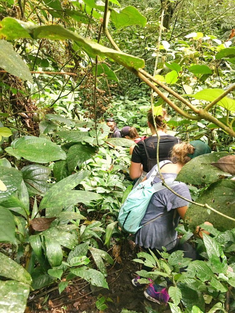 Die abenteuerliche Wanderung führt uns durch den dichten Regenwald.