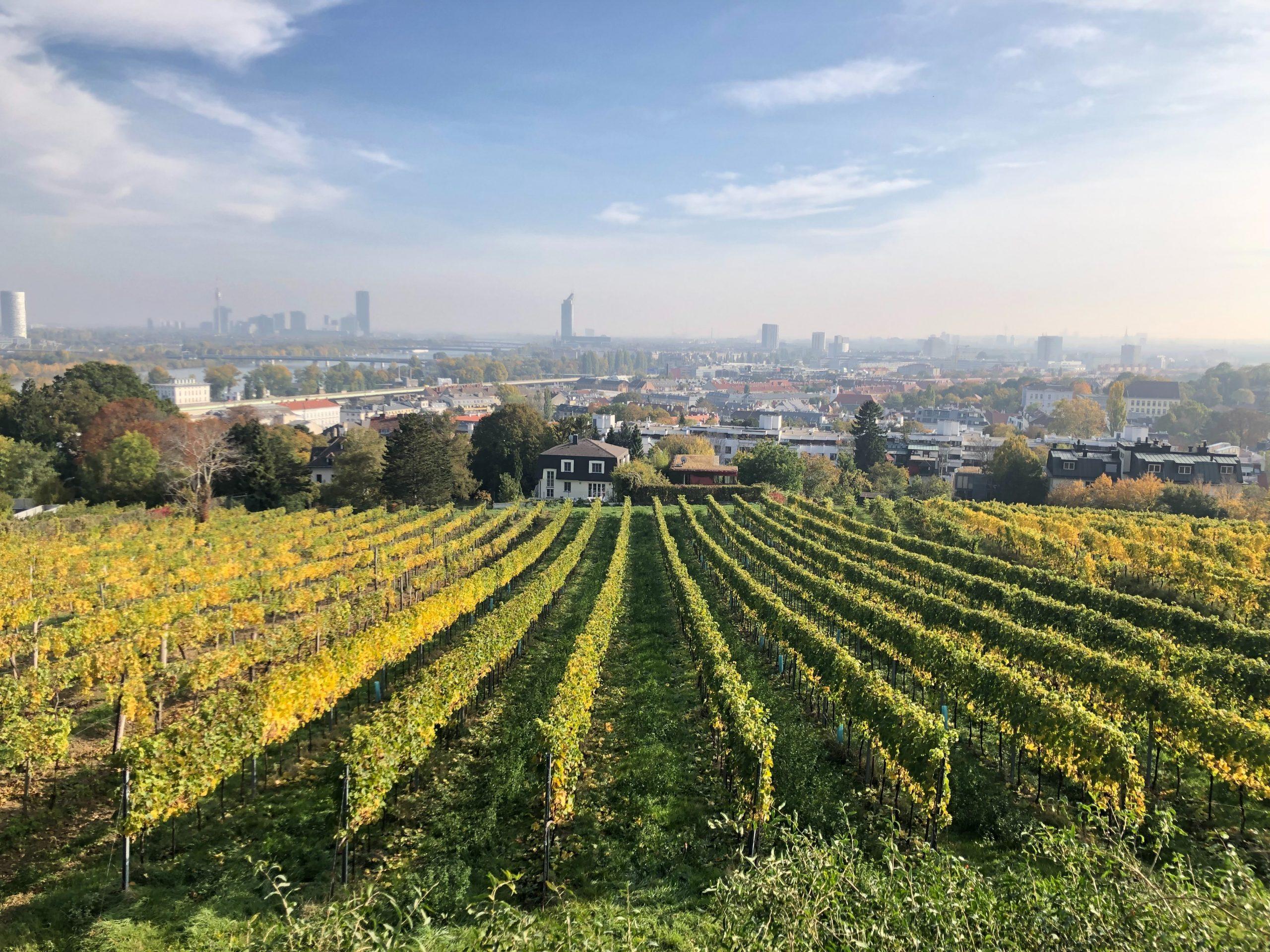 Weinberge in Wien