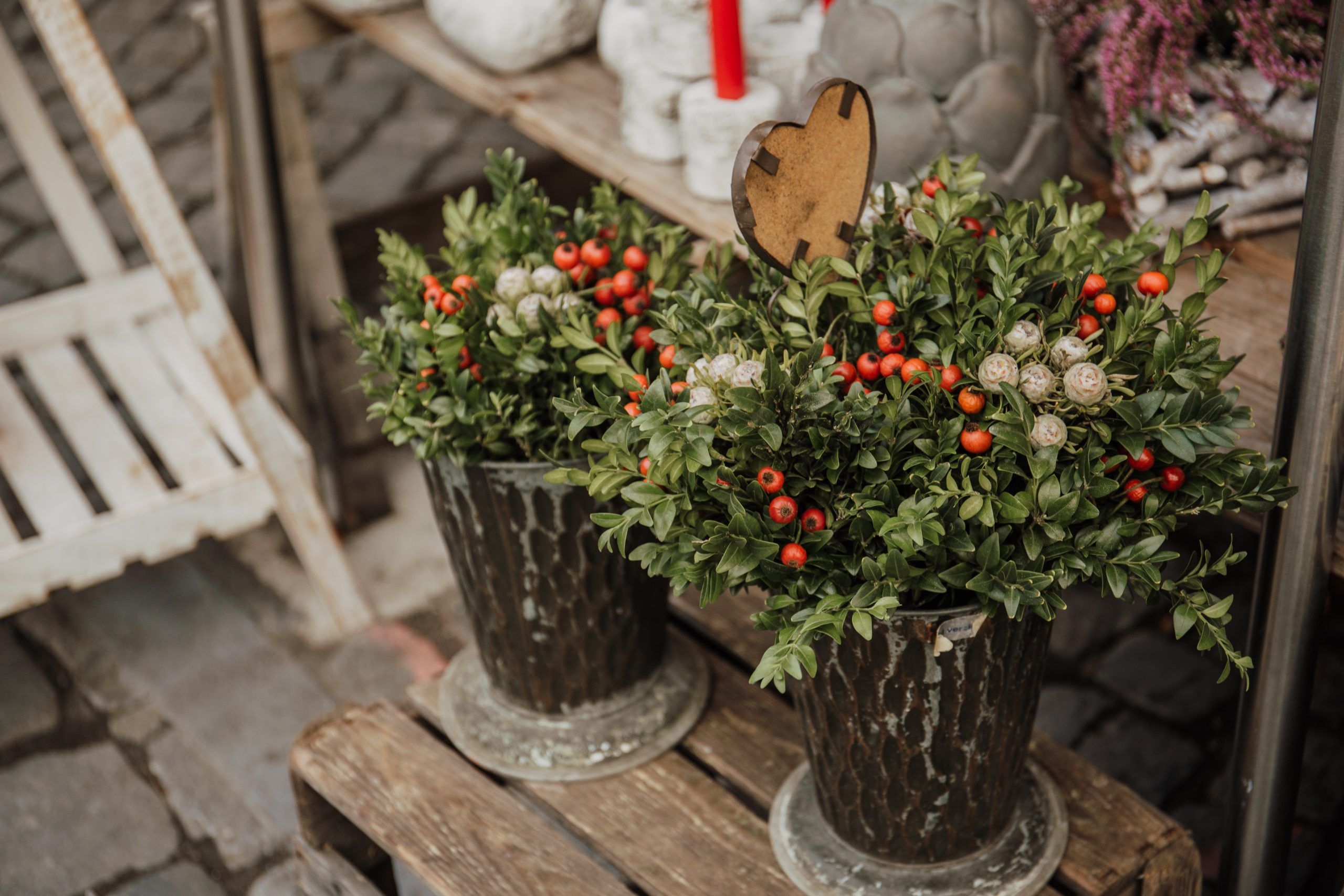 Weihnachtspflanzen in Wien