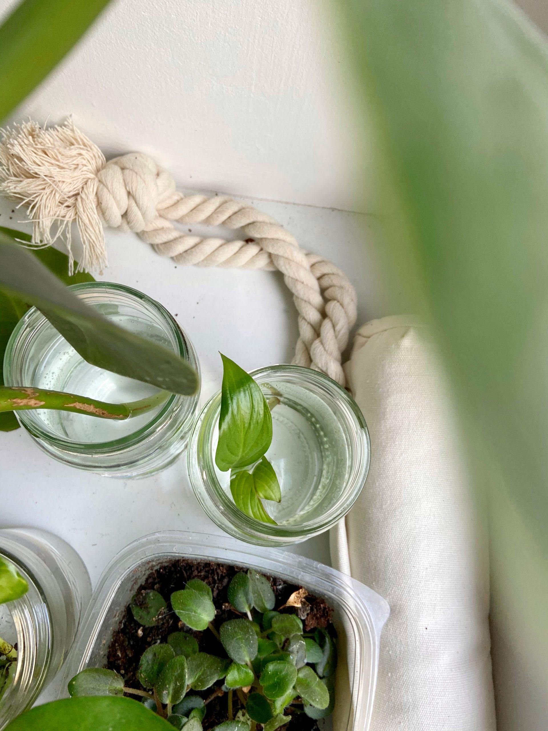 Meine grünen Zimmerpflanzen